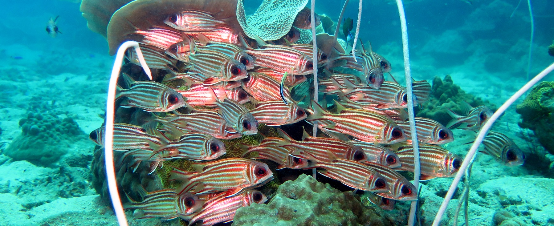 Copy-of-squirrelfish-1