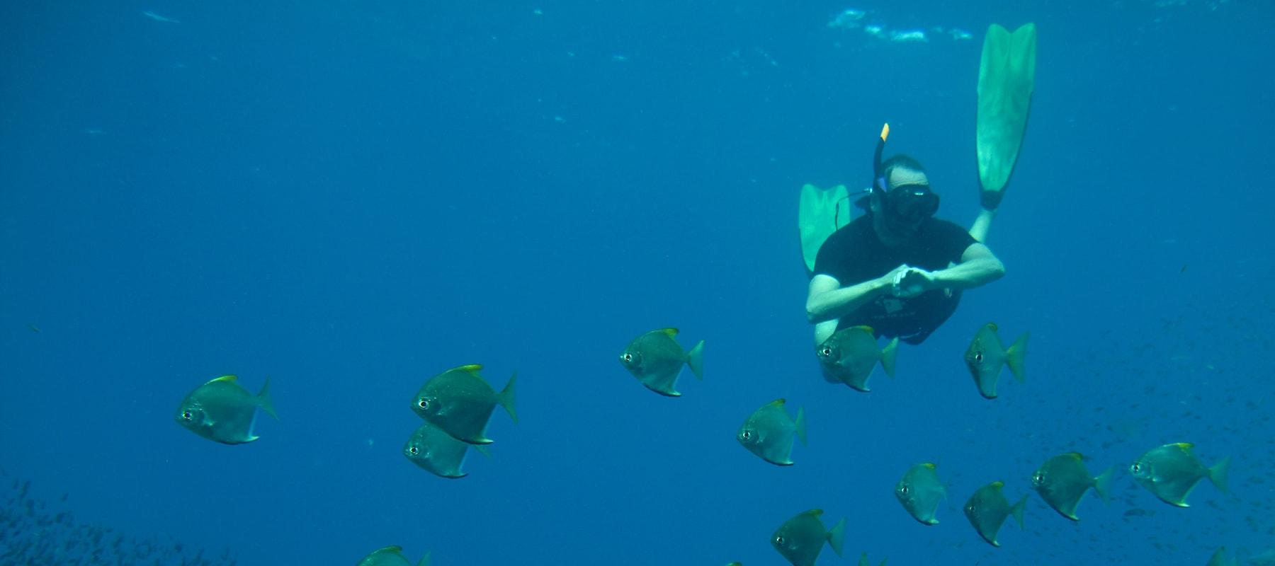 freediver-01