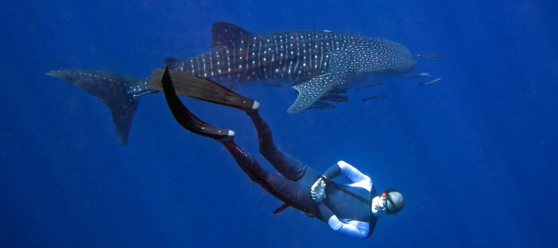 freediver-05